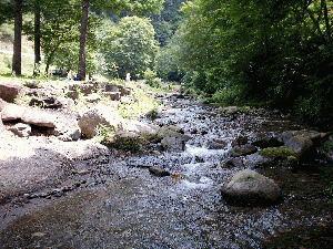 長野県 長者の森 の写真g34733